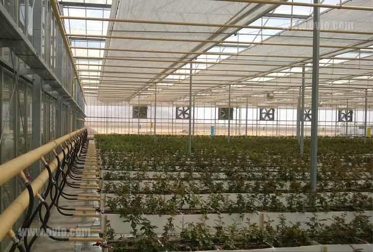 مزیت های گلخانه هوشمند