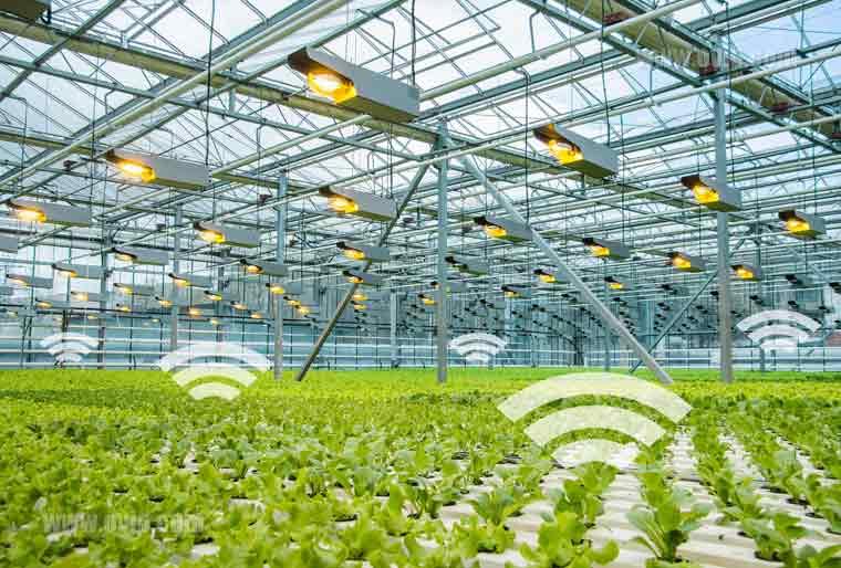 گلخانه های هوشمند: آینده ی کشاورزی